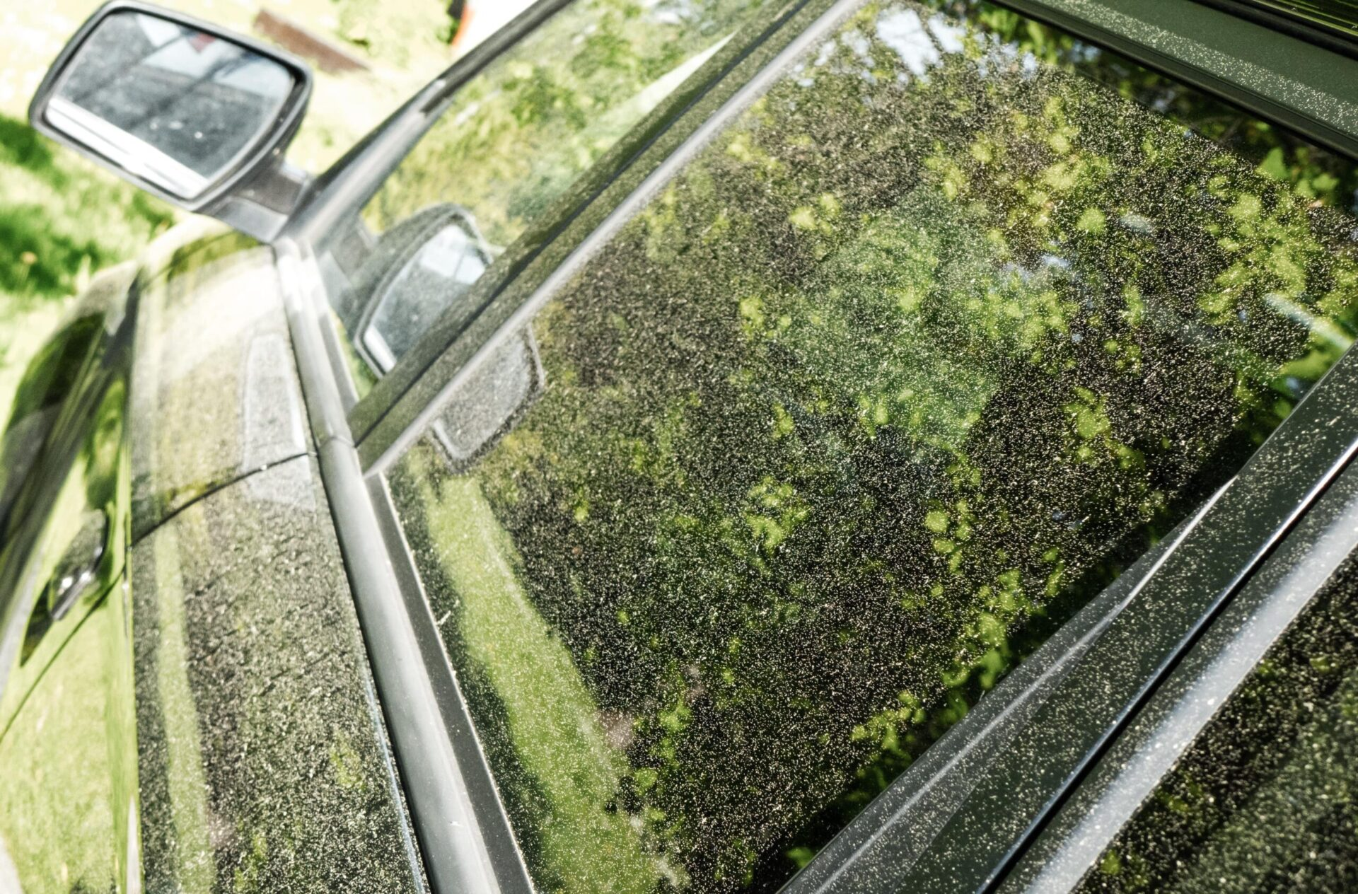 pollen on the surface of a black car that looks green because of how much pollen is on the car. It needs a car wash.